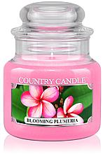 """Parfémy, Parfumerie, kosmetika Vonná svíčka """"Kvetoucí Plumeria"""" (sklenice) - Country Candle Blooming Plumeria"""